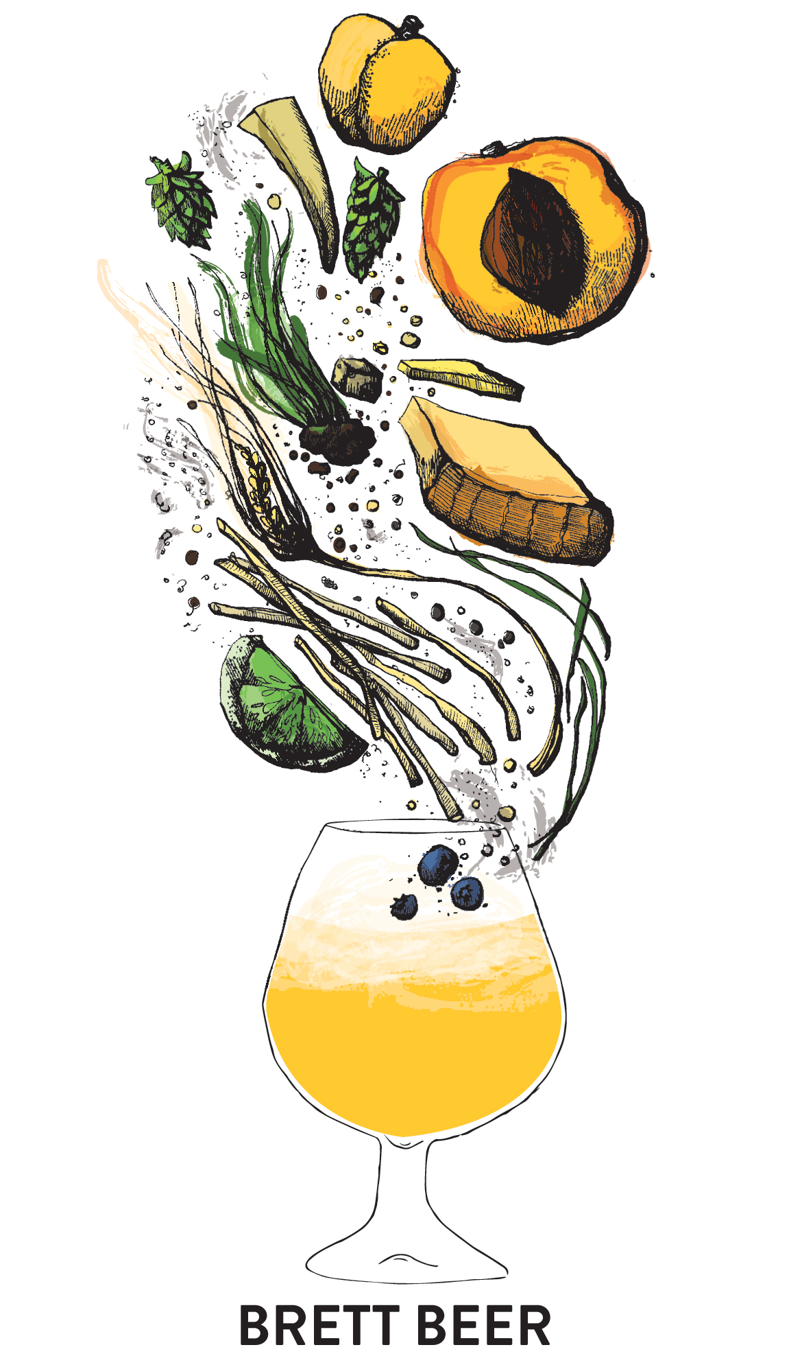 Brett beer flavor and aroma illustration